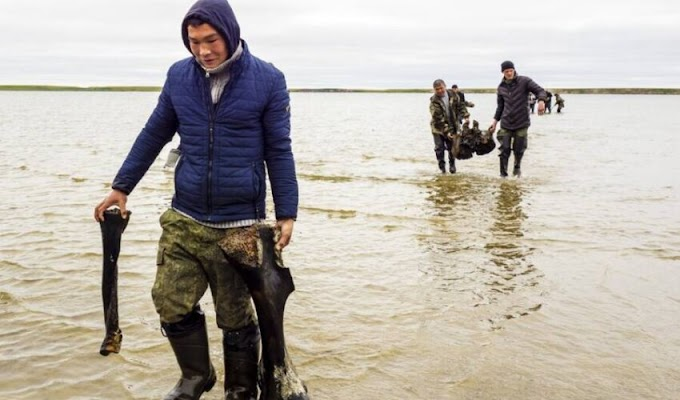 10,000-Year-Old Woolly Mammoth Skeleton Found With Ligaments Intact In Siberian Lake