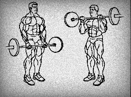 Barbell Curl excercise