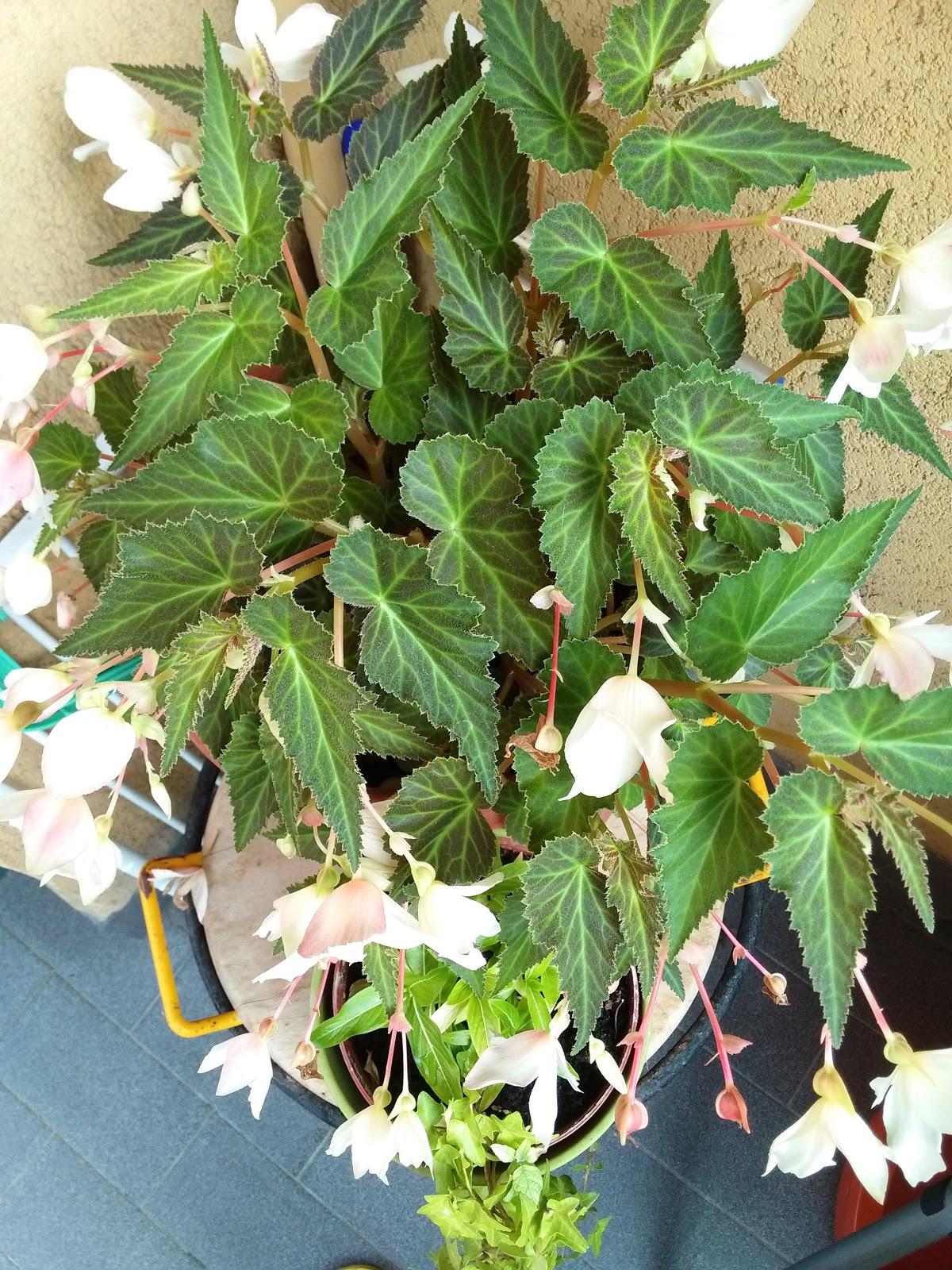 Come ricavare semi da piante e fiori donneinpink magazine for Piante da comprare
