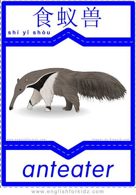 Anteater - English-Chinese flashcards for wild animals topic