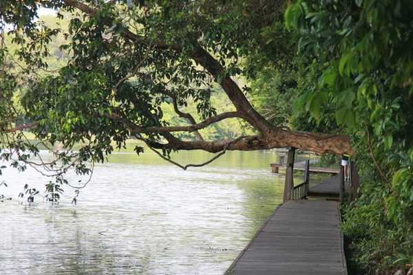 The green parks make you feel comfortable when coming to Singapore
