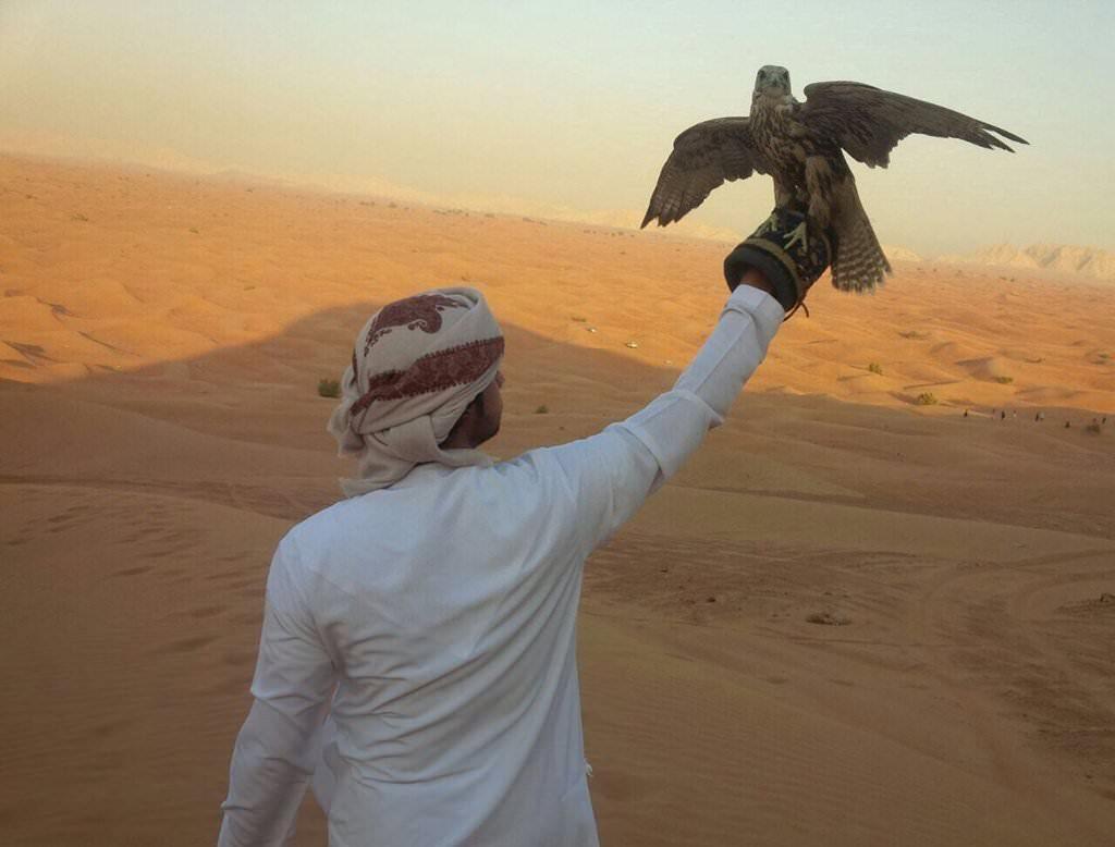 Ras Al Khaimah falcon show