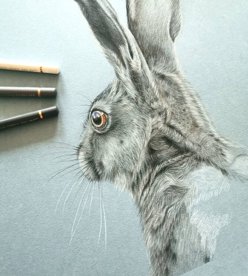 10-Hare-WIP-Bianca-Buer-www-designstack-co