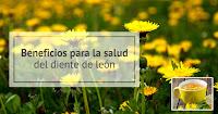 https://steviaven.blogspot.com/2018/10/beneficios-diente-leon.html