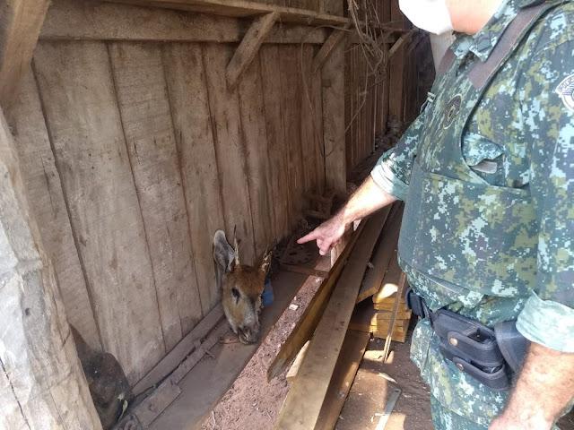 Sitiante leva multa de R$ 5 mil por abate de veado-mateiro, integrante da lista de espécies ameaçadas de extinção