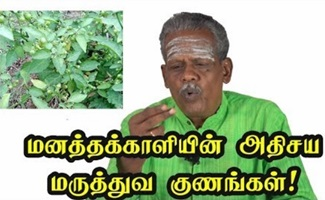 Health Benefits of Manathakkali in Tamil