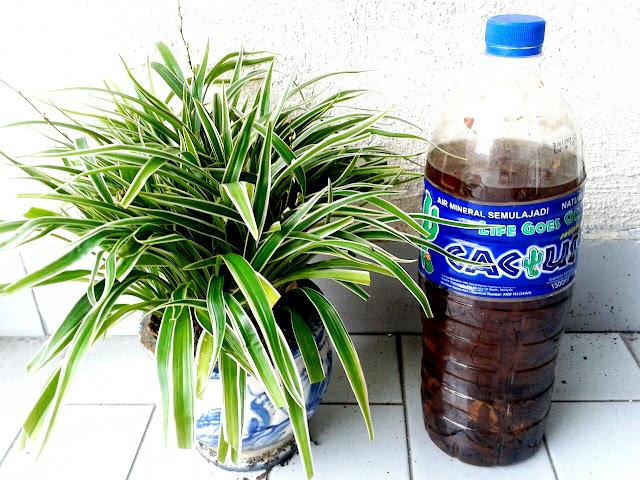 Bio Enzyme, Eco Enzyme, Gargabe Enzyme