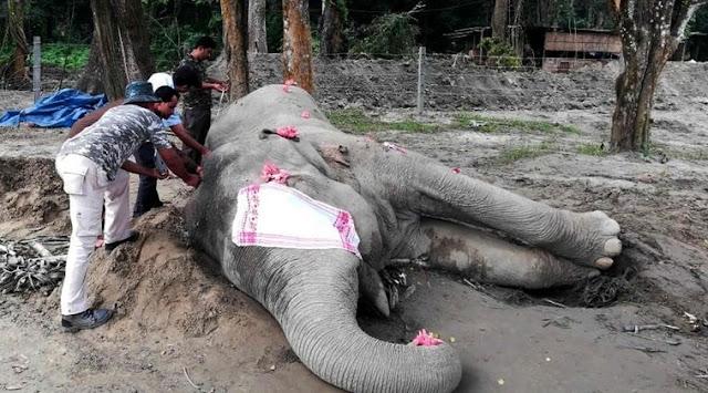 Elephant named after Osama bin Laden dies after going on wild stampede that left five dead