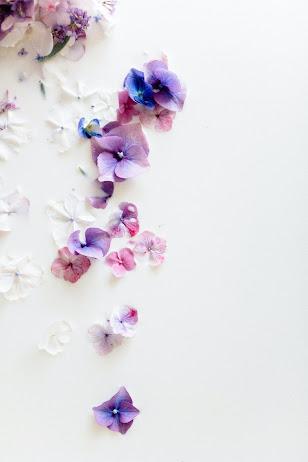 Weiße, lilafarbene und hellblaue Blüten auf weißem Hintergrund