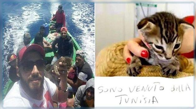 """نجاح قطة في """"حرقة """" إلى إيطاليا يستحوذ على اهتمام الصحافة الإيطالية"""