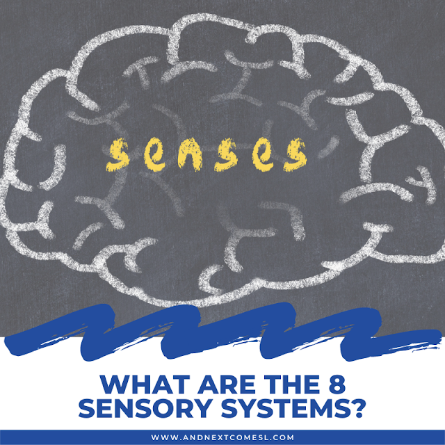 What are the 8 sensory systems? Your 8 senses explained