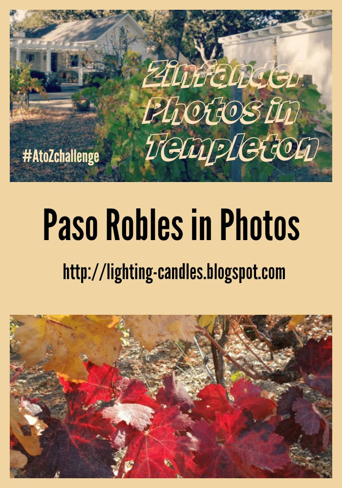 Zinfandel Photos in Templeton