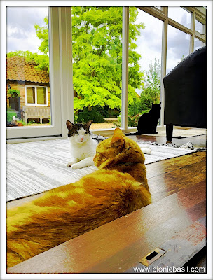 Parsley, Melvyn and Fudge Joint Selfie @BionicBasil® The Sunday Selfies Caturday Art Effect
