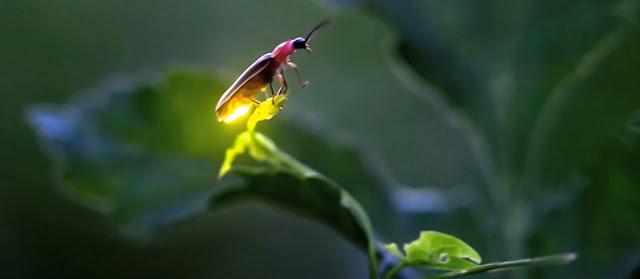 Bioluminiscencia y biologia