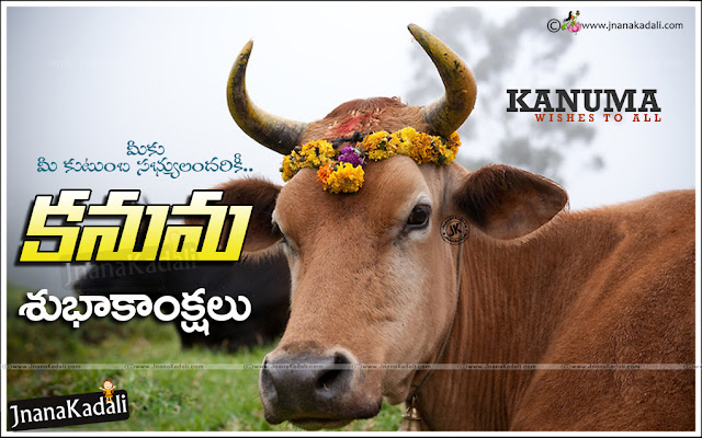 kanuma greetings quotes in telugu, kanuma subhakankshalu in telugu