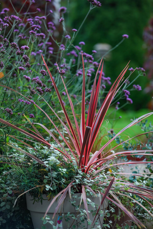 syyskuun-kauneimmat-puutarhassa-100outdoor