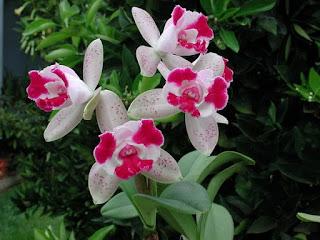 Hoa phong lan đẹp nhất thế giới