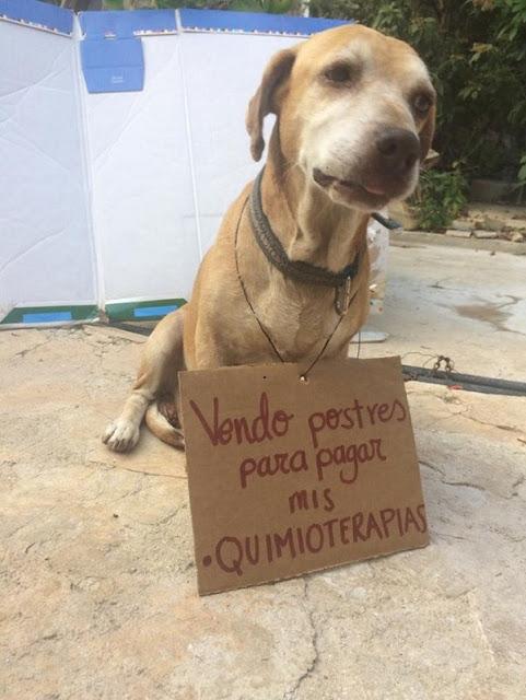 """""""Eu vendo bolos para pagar minha quimioterapia"""" (Imagem: Reprodução/©Vanessa Euán/Facebook)"""