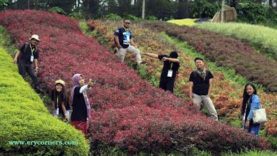 Serang Flower Garden
