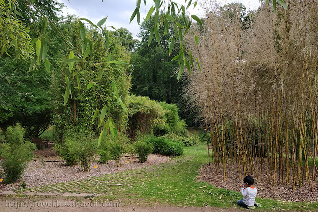 Bamboo Plantentuin Meise Botanic Garden