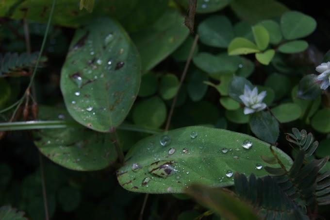 Embun Pagi di atas daun yang Indah.