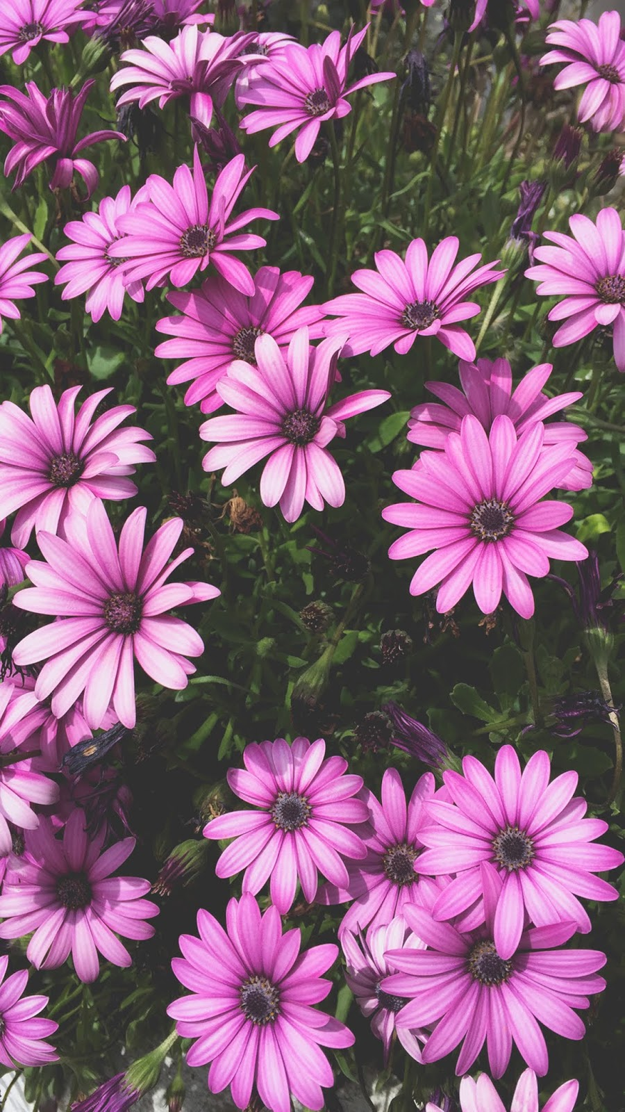 Aesthetic flowers