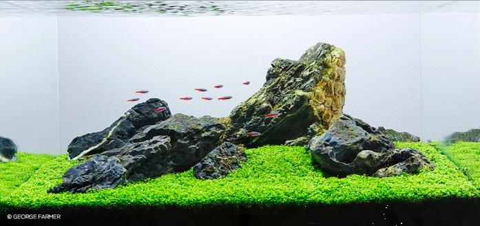 5 Jenis Gaya (Style) di Aquascape - Catatan Aquascape