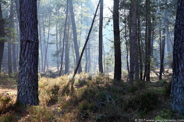 Douces lumières hivernale dans les Trois Pignons, Fontainebleau