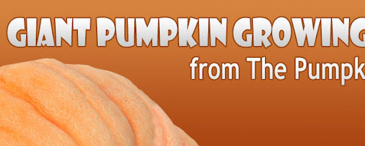 Giant Pumpkin Growing Tips From The Pumpkin Man: Foliar Magnesium & Calcium for the Pumpkin Plants