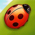 Bug Match