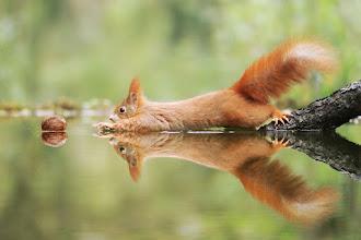 Fotos divertidas da vida selvagem capturadas por um premiado fotógrafo austríaco
