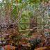 Jardín Botánico Regional del CICY,  35 años de conservación y cuidado de la naturaleza