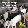 Harga Kambing di Surabaya