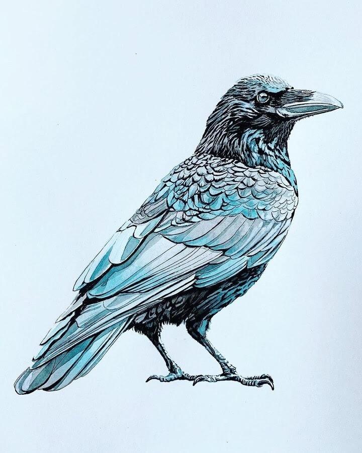 06-The-blue-Crow-Anna-www-designstack-co