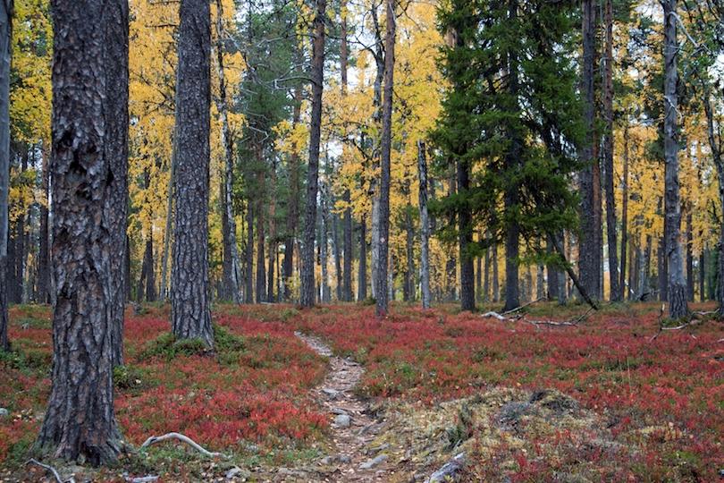 اجمل الحدائق في فنلندا