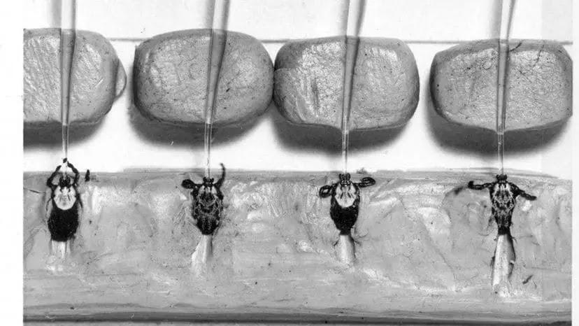 Apakah Penyakit Lyme Dibuat sebagai Bioweapon?