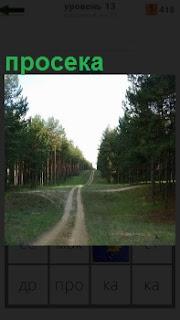 В середине леса сделана большая просека, по которой пролегла дорога для машин и людей