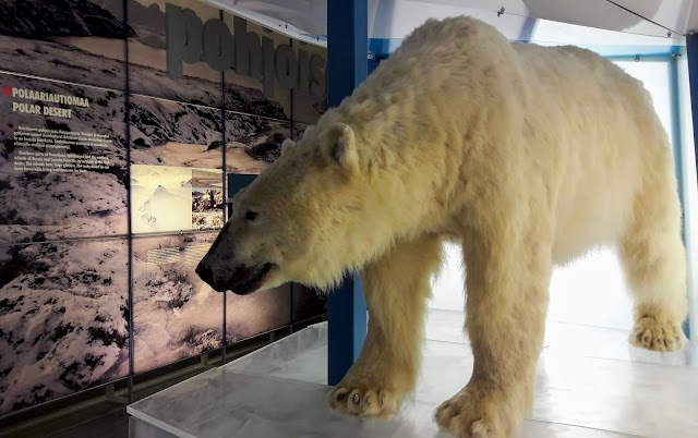 Want to see icebears in Finland