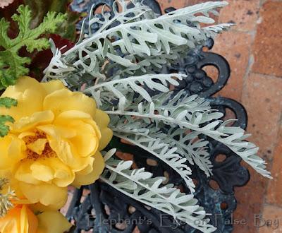 Centaurea leaves