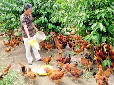 Cám trùn cho vật nuôi và thủy sản
