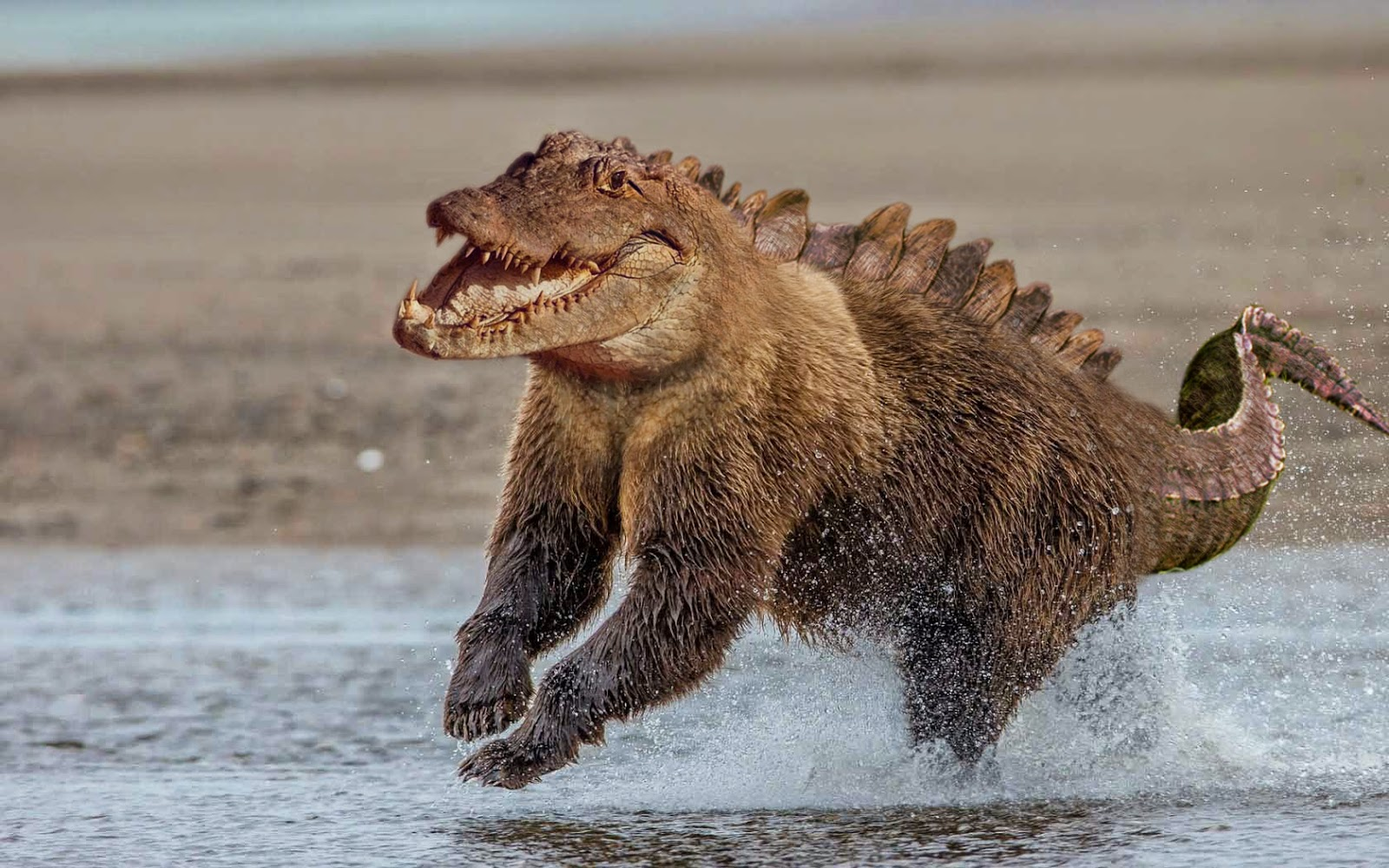 01 The Crocobear-reddit-Animal-Mashups-Lovely-or-Scary-www-designstack-co
