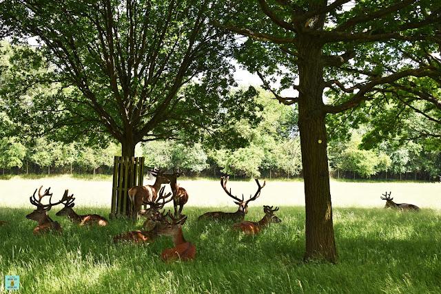 Richmond Park en Londres