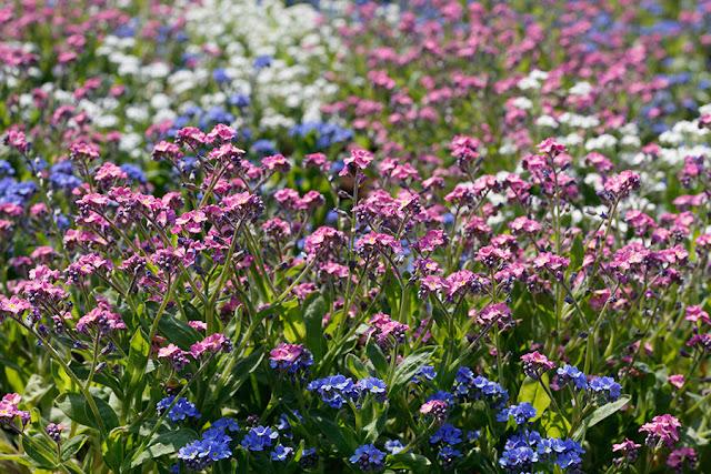 Spring Blossom 7
