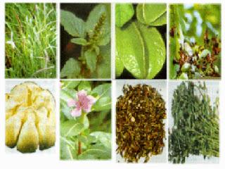 adalah sejumlah jenis tumbuhan yang bisa difaedahkan sebagai solusi alternatif pengobatan guna  7 Jenis Tanaman Obat Yang Difaedahkan Batangnya