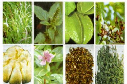 7 Jenis Tanaman Obat Yang Dimanfaatkan Batangnya