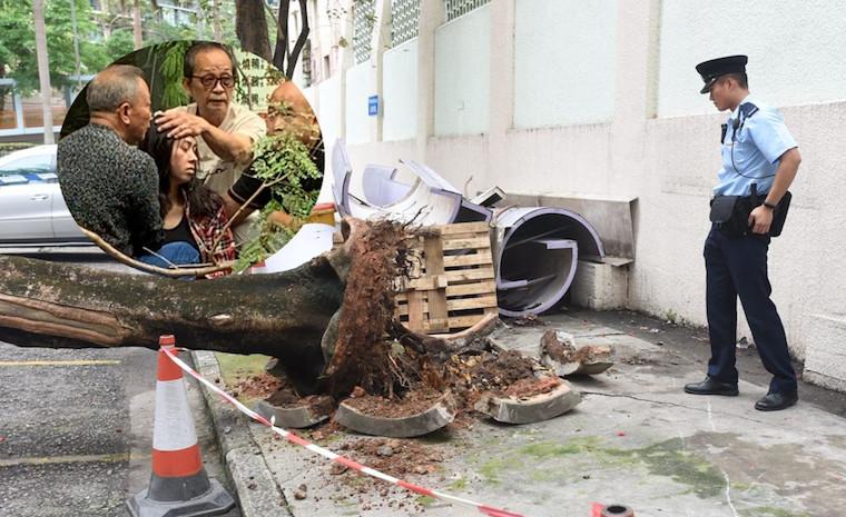 Tertimpa Pohon Yang Tumbang,Kepala Wanita di Hung Hom Ini Alami Luka Serius