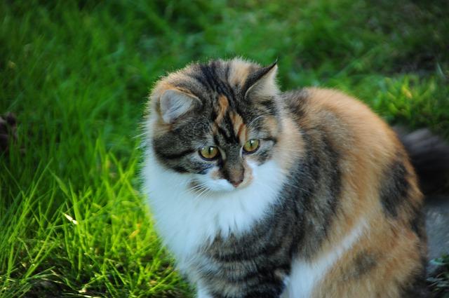 Jenis Kucing Mix Dome