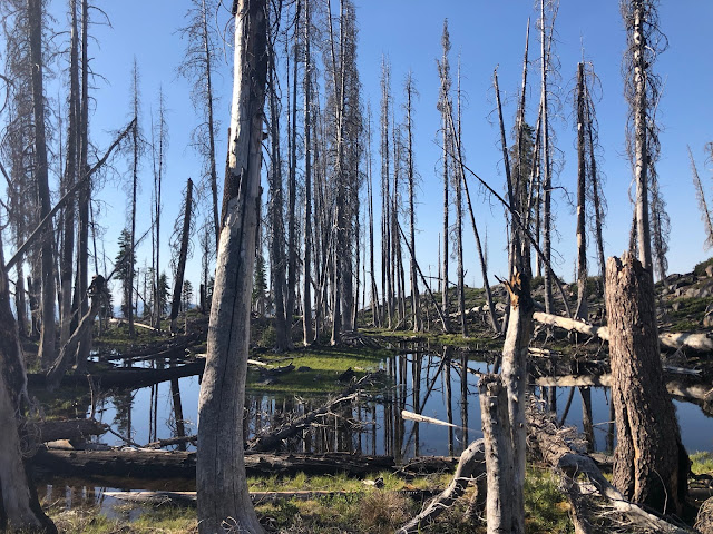 small lake surrounded by burned trees