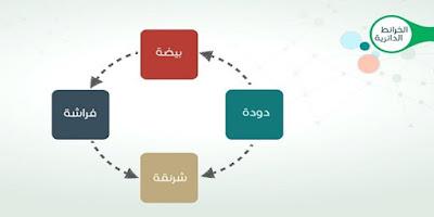 أنواع خريطة المفاهيم