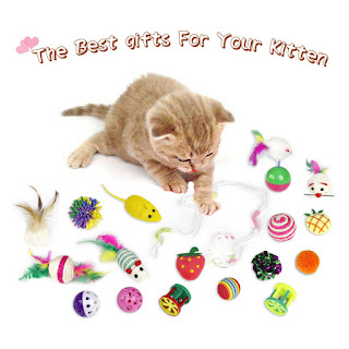 Best cat toys and pet play